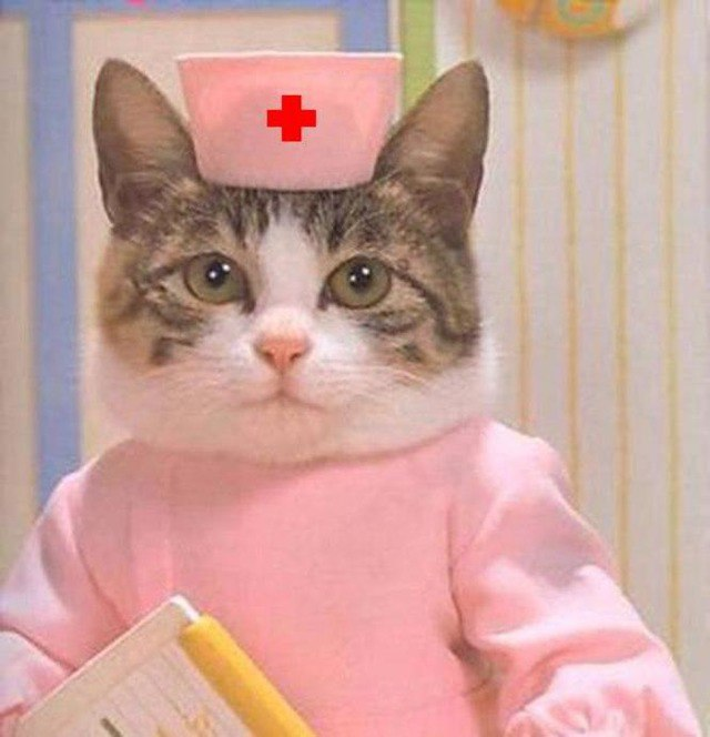 выздоравливай кошка картинки фамилию преподавателя