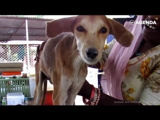 Как спасали собаку