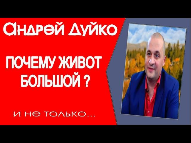 ПОЧЕМУ ЖИВОТ БОЛЬШОЙ Андрей Дуйко
