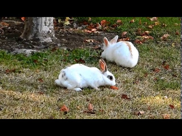 Los conejos, кролики, Parque de la Paloma Benalmadena Malaga Costa del Sol Spain, 10/08/2017