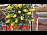 Флористика !Букет цветов! Собираем букет из тюльпанов! Yellow tulipsFloristics