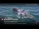 В Австралии спасатели ищут дельфина в футболке, которому грозит гибель