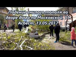ЧП во дворе дома по ул. Московская, 11 - рухнувшее дерево раздавило авто,  г.!
