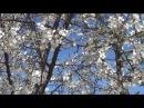♫ Наедине с весной и музыкой... Эдгар Туниянц - Романс. Edgar Tuniyants - Romance.