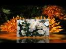 Как красиво цветут хризантемы Блюз Саксофон Релакс Для Вашей души