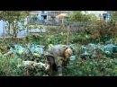 ФИЛЬМ О РОССИИ* Небесные жены луговых мари 2012 кино не для всех