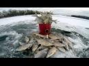 Зимняя рыбалка. Ловля белой рыбы густера. Бешеный клёв. Рыбалка на льду.