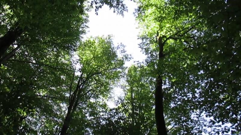 Пение птиц в весеннем лесу.