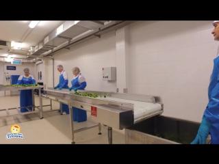 Манекен Челендж на заводе детского питания