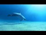 музыка для медитации дельфины