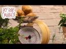 10 новых блюд из картошки. Часть 2 — Все буде смачно. Сезон 4. Выпуск 39 от 12.02.17