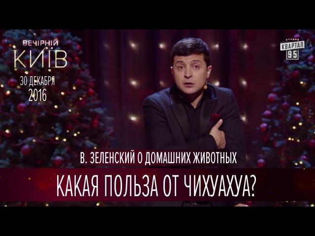 Какая польза от Чихуахуа В Зеленский о домашних животных Вечерний Киев 2016