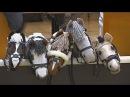 Финляндия: скачки на игрушечных лошадках (новости)