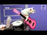Funny Heavy Metal Cats Vs Attila