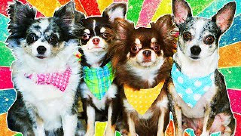 Magic Pets! Собаки блогеры Чихуахуа СОФИ и ЭЙВАН Собака Миша Щенок покемон Юми Чу и другие питомцы