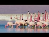 Beat The System (Flamingo - Riffin) A.Ushakov
