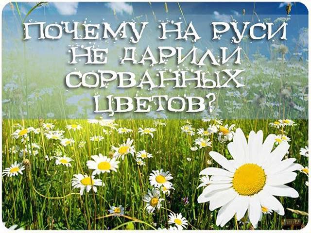 Почему на Руси не дарили сорванные цветы