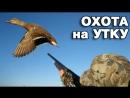 Охота на утку. Лучшие налеты