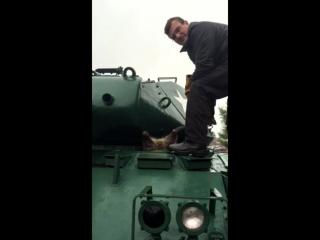 Толстый енот застрял в танке вверх тормашками