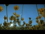 Ричард Клайдерман. Beautiful Melodies