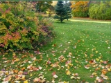 Листья жёлтые. Раймонд Паулс