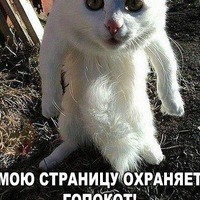 Sasha Chernov