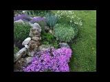 Почвопокровные цветы - многолетники. Видео обзор 14 растений.