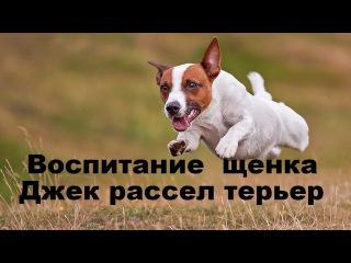 Видеозаписи Дрессировка и воспитание собаки ВКонтакте