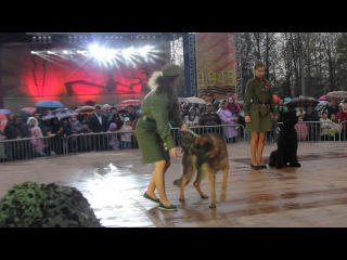 Дарья и немецкая овчарка Лютый, Татьяна и ризеншнауцер Барс,Яна и доберман Берта.