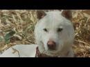 Горо Золотой пес 1979криминал,драма 18