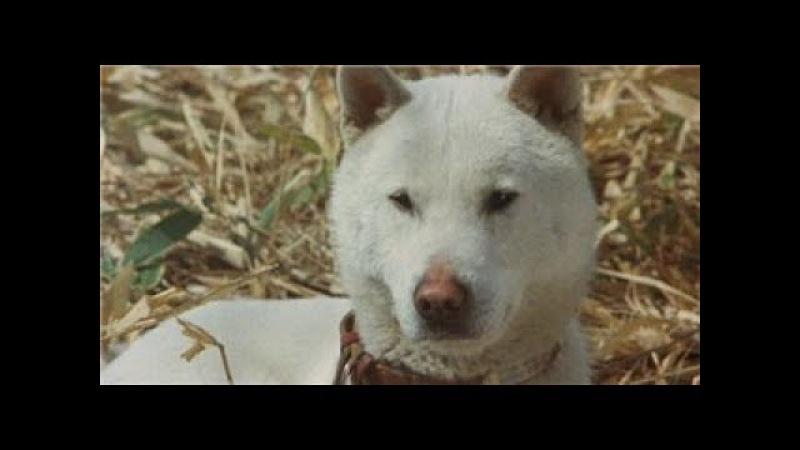Горо Золотой Пес (1979)криминал,драма (16)