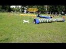 международная выставка собак всех пород, Харьков, стадион Пионер, 24062017, часть 4