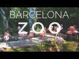 Зоопарк Барселоны  Barcelona ZOO