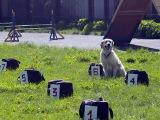 Собачья работа 6 серия