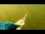 Подводная охота!Дневной улов,ухи на неделю!