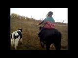 едем едем в соседнее село) верхом на корове) со своей фонотекой