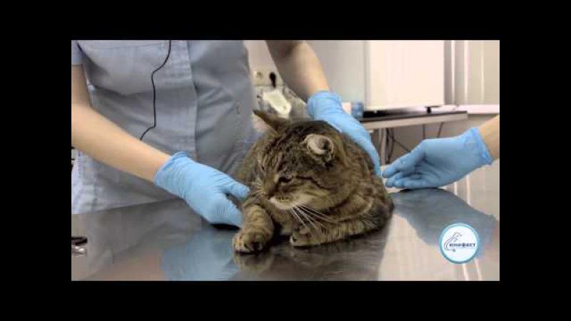 Как подстричь когти коту кошке