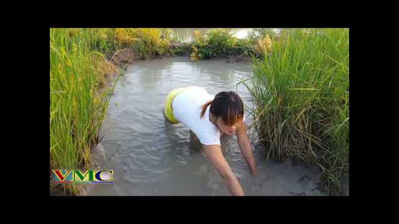 Cô gái xinh đẹp đi bắt cá - Cuộc sống quê tôi P7 | Variety Music Channel