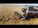 Уборка зерна На зерноуборочном комбайне ACROS 530.580