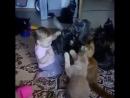 любимчик кошек