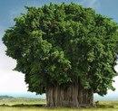Самые причудливые деревья мире