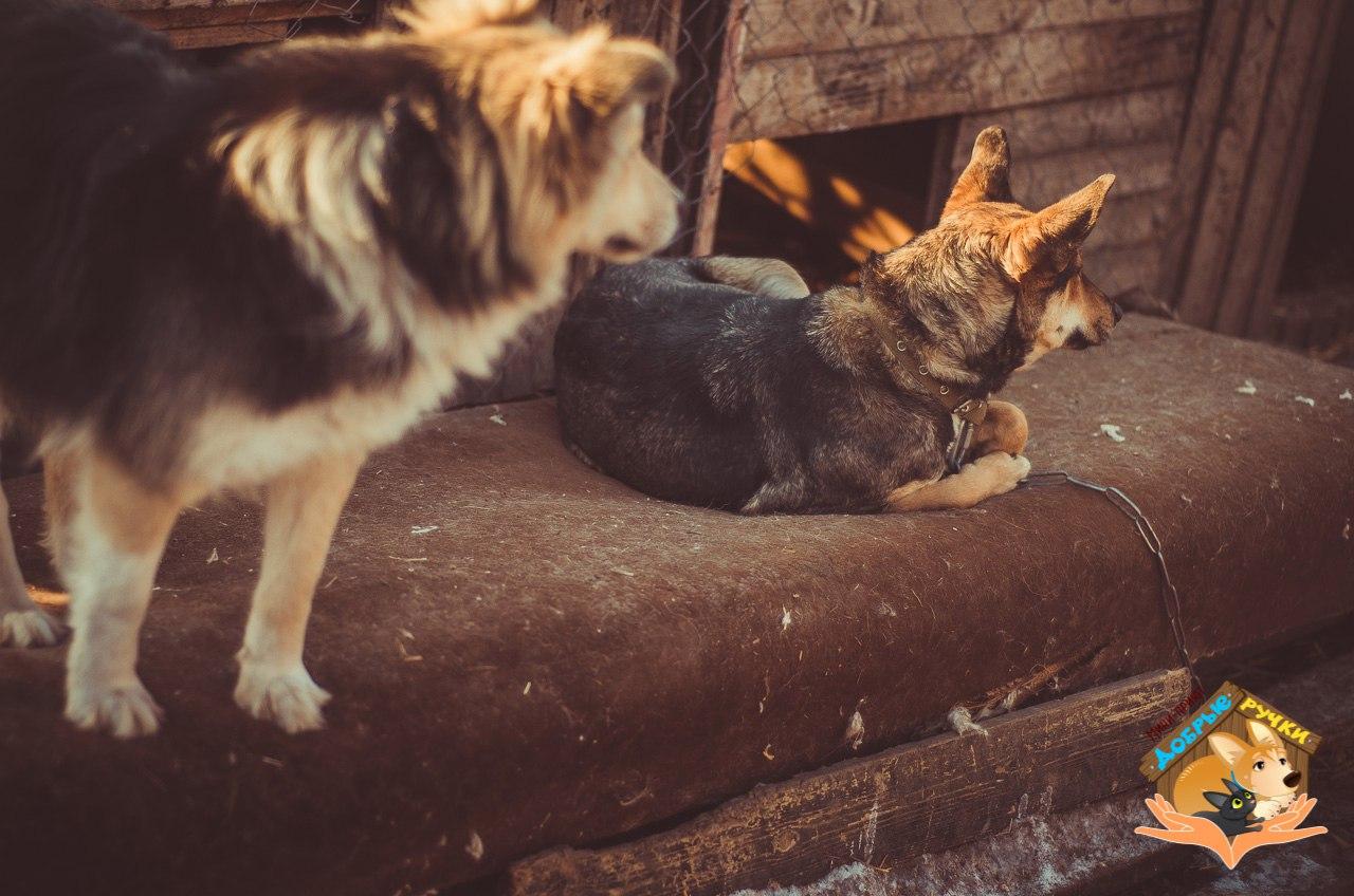 Будни приюта глазами фотографа (ФОТО)