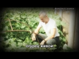 Doc Popov - Zdorovie Style(Parody PSY - Gangnam Style)