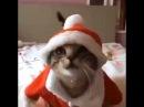Новогодний Котейка (Такого Плюшевого Деда Мороза Мы Еще не Видели) (Прикол Юмор Смешное Видео)