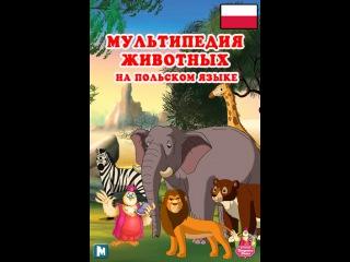 Мультипедия животных на польском языке Litera T - Tygrys