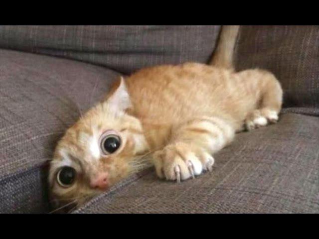 Top 10 Funny Cat Videos Funny Cats 2017