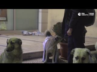 Спасение собак от морозов в Стамбуле