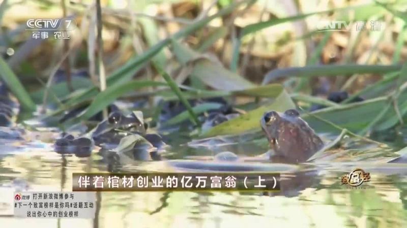 Миллиардер Чжу Чжимин (часть 01), или ''Ва Ван'' (Король Лягушек) - история бизнеса от первого лица, городской уезд Чжаланьтунь.