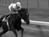 Скаковая лошадь Резвая последние минуты жизни
