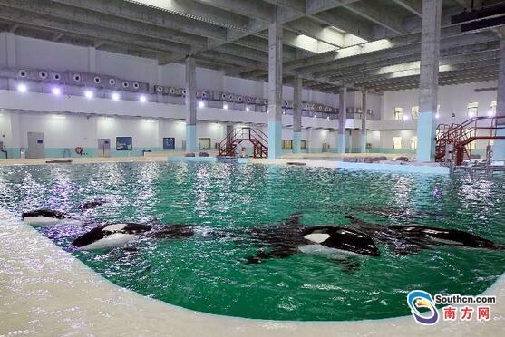 [Russie] Un total de 8 orques capturées - Page 17 Aaz-58XDnbg